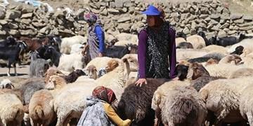 نقش اساسی عشایر در توسعه اقتصادی آذربایجان غربی