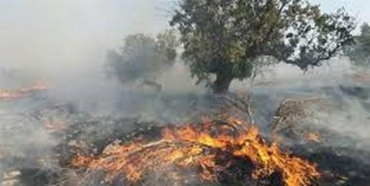 آتشسوزی مرز میان نیریز و استهبان مهار شد