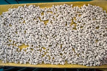 نقل ، از مشهورترین سوغاتی های ارومیه