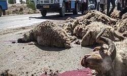برخورد تریلر با گله گوسفندان در ایلام حادثه آفرید