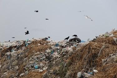 عکس   داداشآباد انبار زباله آستارا