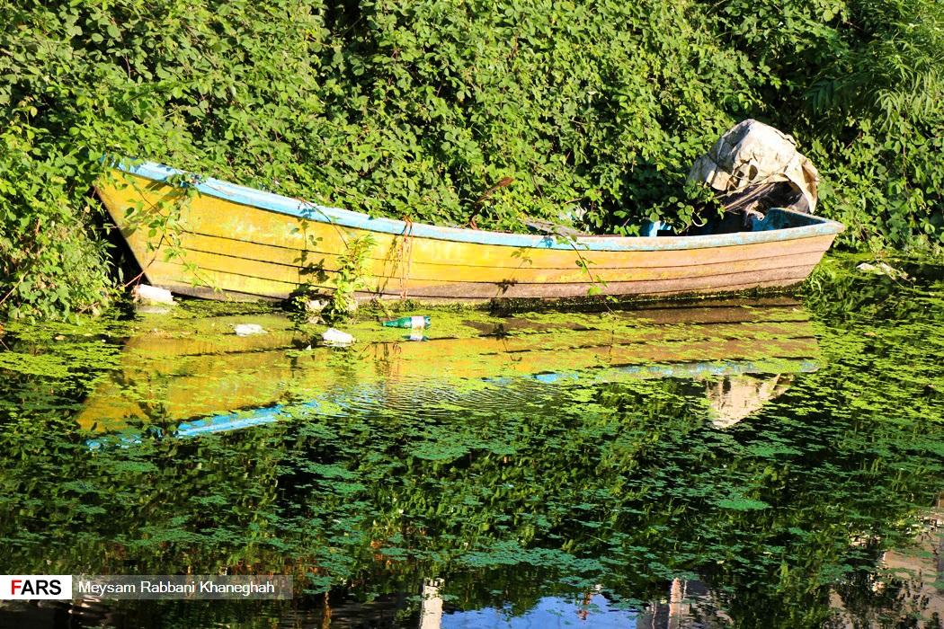 عکس   رودخانههای آستارا در تسخیر آزولا