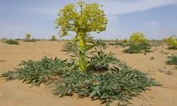 1500 هکتار از مراتع تخریب شده کهگیلویه احیاء میشود