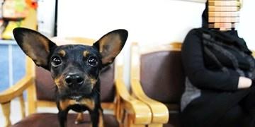 نوبت عمل زیبایی حیوانات خانگی! + جدول هزینهها