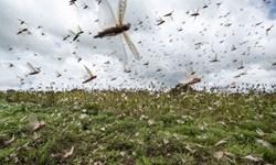 آفتکشی ملخ مراکشی در سطح ۱۱ هکتار از اراضی رودبار