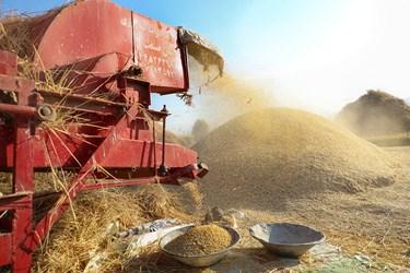 کشاورزان از کمباین و تراکتور برای جدا کردن گندم از ساقه استفاده می کنند که این کار در قدیم  به وسیله خرمن کوب که به حیوانات می بستند انجام می شده