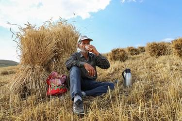 استراحت نیم روزی کشاورز بعداز برداشت گندم