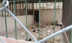 باغوحش یا شکنجهگاه حیوانات؛ بلاتکلیفی باغ وحش خرمآباد پایان ندارد