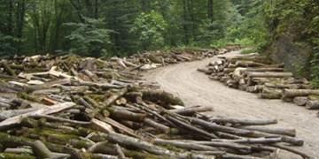 تراژدی مرگ جنگلهای زاگرس