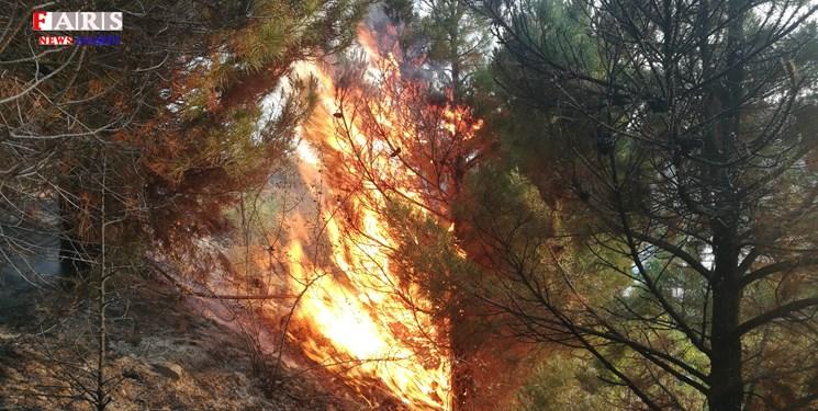 دخترانی که به عشق جنگل به قلب آتش زدند+فیلم و عکس