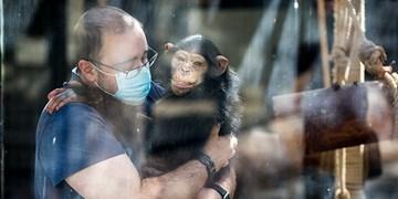 موافقت موقت و مشروط محیط زیست با خروج «باران» از باغوحش