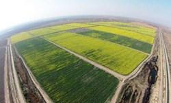 احیای اراضی خوزستان انقلابی در کشاورزی و تولید/ 9.۵ میلیون تن محصول به تولیدات کشاورزی افزوده می شود