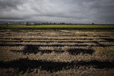 فرسایش خاک، کاهش قوت زمین (حاصل خیزی زمین)، پوشیده شدن روزنه خاک برای نفوذ آب و از بین رفتن حشرات خاک ساز از دیگر مضرات مهم اقتصادی ناشی از آتش سوزی کاه و کلش است که تاکنون جدی گرفته نشده است