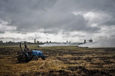 کشاورزان پس از درو برنج ساقه اضافی آنرا در زمین رها میکنند و سپس با کمک تراکتور یا بصورت دستی انرا جمع اوری میکنند و میسوزانند