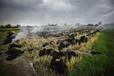 آتش زدن زمین های کشاورزی پس از برداشت برنج بسیار خطرناک است به دلیل اینکه امکان سرایت آتش به زمین های مجاور و باغ های مرکبات بسیار زیاد است که باعث بوجود آمدن خسارت جبران نا پذیری میشود