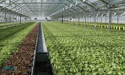 تامین امنیت غذایی کشوربا توسعه گلخانههای هایتک و هیدروپونیک