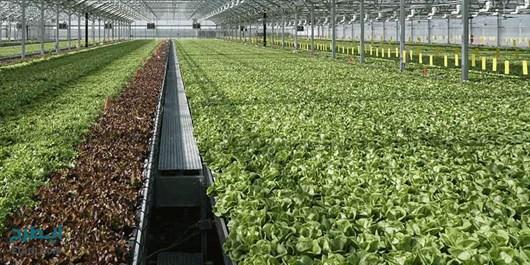 توسعه 250هکتاری گلخانه های شهرستان هریس با وجود سرمایه گذاران و صادرکنندگان
