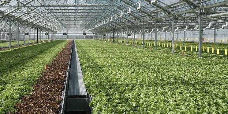 50 واحد گلخانه صنعتی با 50 هزار متر مربع در شهرستان اهر