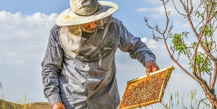تولید 2800 تن عسل در لرستان