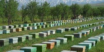 فعالیت ۱۲۲۰ زنبوردار در شهرستان شبستر
