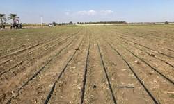 برنامه ریزی برای کشت ۱۰۰ هزار هکتار محصولات زراعی پاییزه در سیستان وبلوچستان