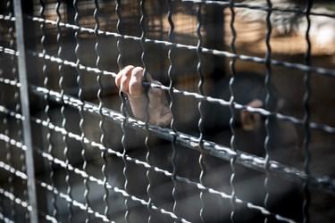 طی چند روز گذشته و با اصرار محیط زیست، باران ملزم به حضور در قفس  باغ وحش ارم بود