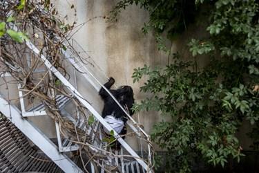 پایین آمدن از ارتفاع های کم حتی  پله ها برای باران دشوار است و او این کار را با احتیاط فراوان انجام می دهد.