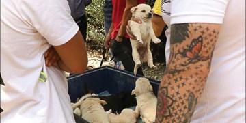 جمعهبازار سگهای اشرافی!/ از مینیاتوریهای ماستخور 15میلیونی تا عظیمالجثههای 70میلیونی