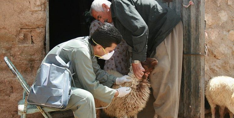 تب سهروزه در کمین بارانداز دام صومعهسرا/دامپزشکی: آمادگی کامل داریم