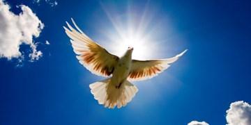 آزادی پزشک خیر همدان با فراخوان «چاووشی»