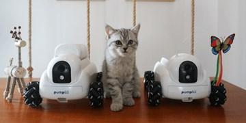 رباتی که حیوانات را سرگرم می کند