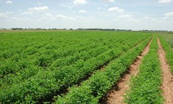 یک میلیون و ۸۶۰ هزار متر زمین تحویل کشاورزان دهستان کلین شد