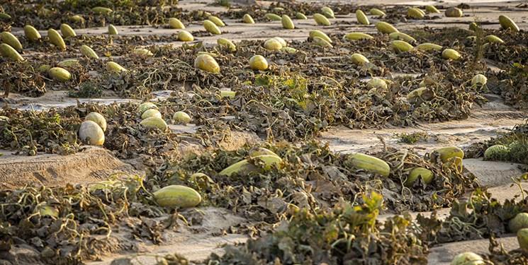 خسارت باران تابستانه در خراسانجنوبی| از قطع آب و برق تا برآب رفتن دسترنج کشاورزان