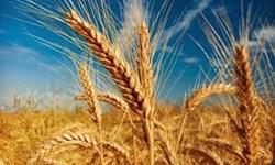 استفاده از آب سبز  برای رونق بخش کشاورزی / خشکسالی در 13 استان کشور