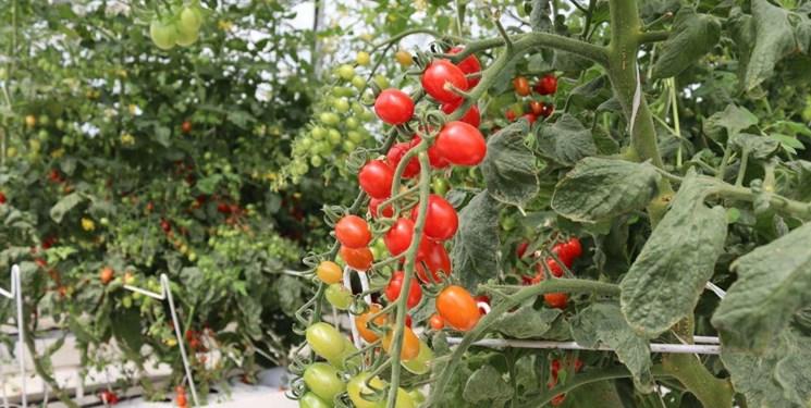 احداث گلخانه بهترین راهکار برای مقابله با معضل بیکاری است