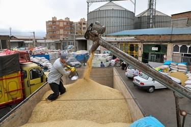کارگران در بنگاه شبانه روزی علّافان اردبیل جوها را برای انتقال به سیلو بارگیری میکنند.