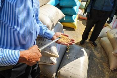 بمبوگندم یا سوک گندم ابزاری از جنس لوله های فلزی بوده که جهت نمونه برداری انواع غلات از آن استفاده می شود.