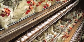 افتتاح بزرگترین پروژه تولید تخممرغ خاورمیانه با حضور وزیر جهاد کشاورزی