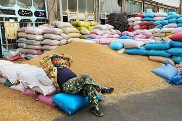 یکی از کارگران بنگاه شبانه روزی علّافان اردبیل در حال استراحت بر روی گونی های گندم است.