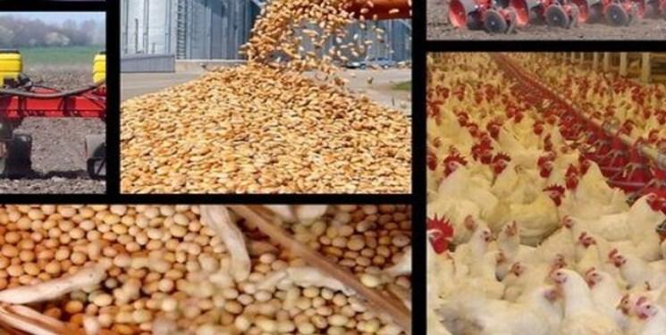 سخنگوی کمیسیون کشاورزی مجلس: قیمت نهادههای دامی 460 درصد افزایش داشته است