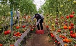 افتتاح گلخانه  ۲۰ هزار متری در پیشوا