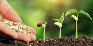 توسعه باغات دیم در مناطقی با بارش بالای 300 میلیمتر