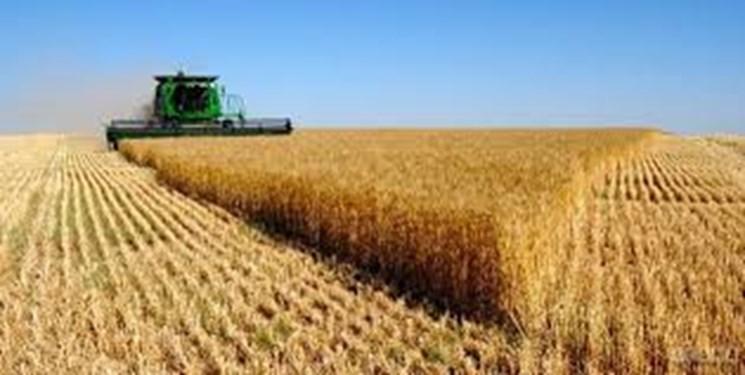 واردات گندم به دو برابر قیمت داخلی/با تعیین نرخ مناسب از کشاورزحمایت شود