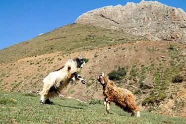 منطقه کوهستانی روستای ناتِر  شهر مرزن آباد