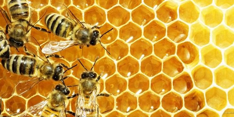 غفلت از ظرفیت صنعت زنبورداری کشور/ وزیر آینده به فکر تولید کیفی باشد