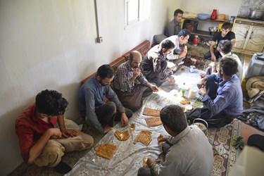 20 کارگر فصلی با حضور در مزارع و صرف صبحانه آماده برداشت محصول گوجه فرنگی می شوند .