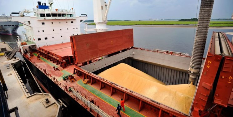 36 کشتی نهاده خوراک دام و طیور وارد کشور میشود/ دلالبازی دلیل افزایش قیمت تخممرغ