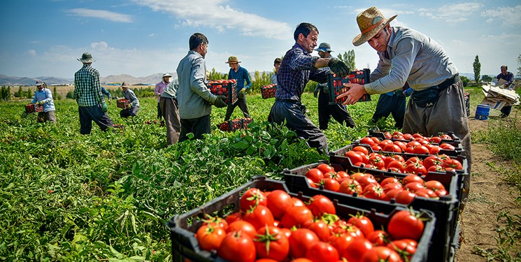 تصمیم پاکستان برای واردات پیاز و گوجه فرنگی از ایران