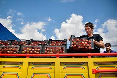 جابجایی سبدهای آماده شده گوجه فرنگی در کامیون جهت انتقال به بازار مصرف روزانه و کارخانههای مواد غذایی