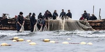 صید بیش از ۸۰ تن انواع ماهی استخوانی در آستانهاشرفیه/صیادان ماهیهای درخطر انقراض را تحویل دهند